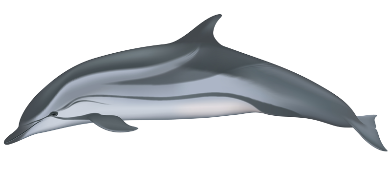 Dolphin sperm endoplasmic membrane systeme